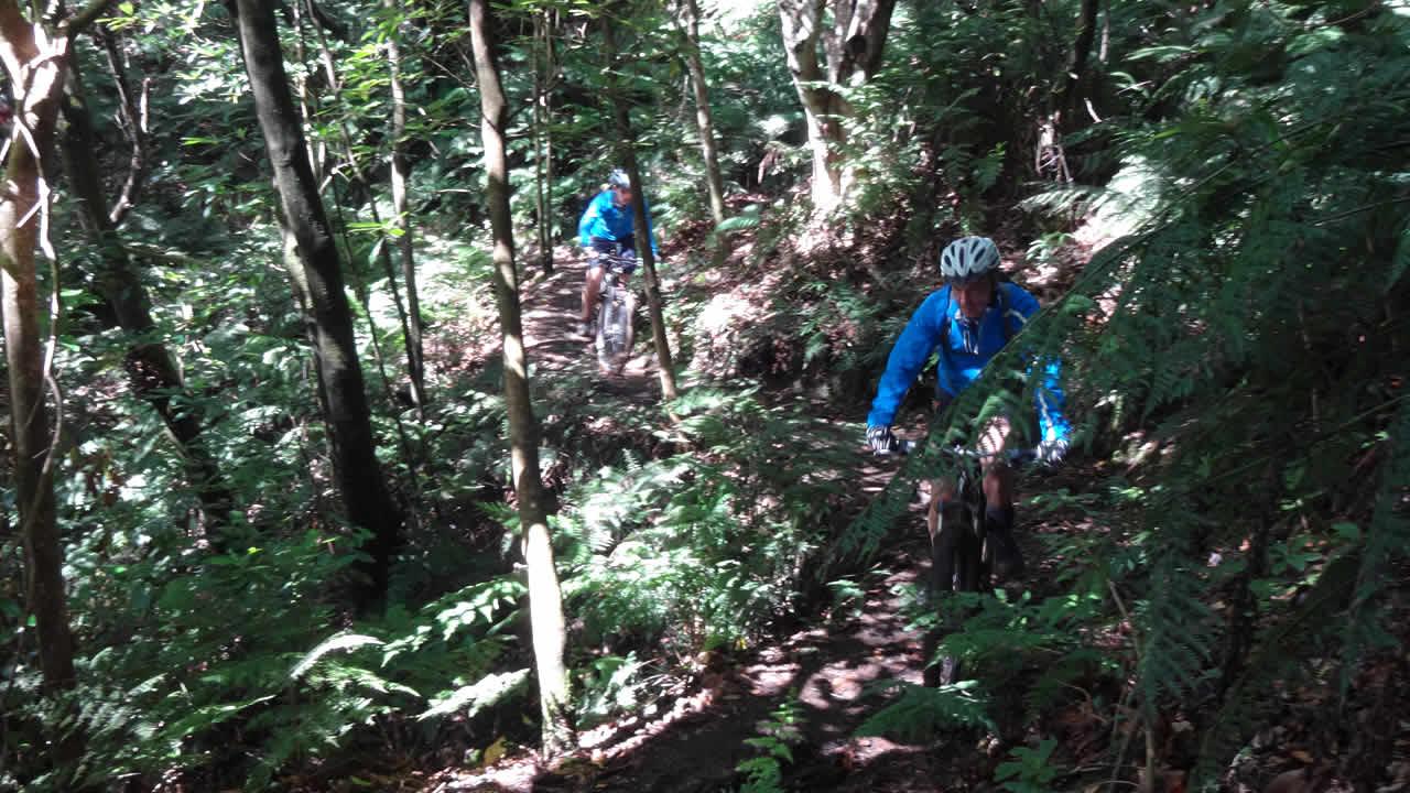 Trailsucht: Durch Madeiras Wälder
