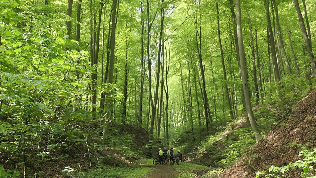 Odenwald – traumhaft schön, tolle MTB-Region