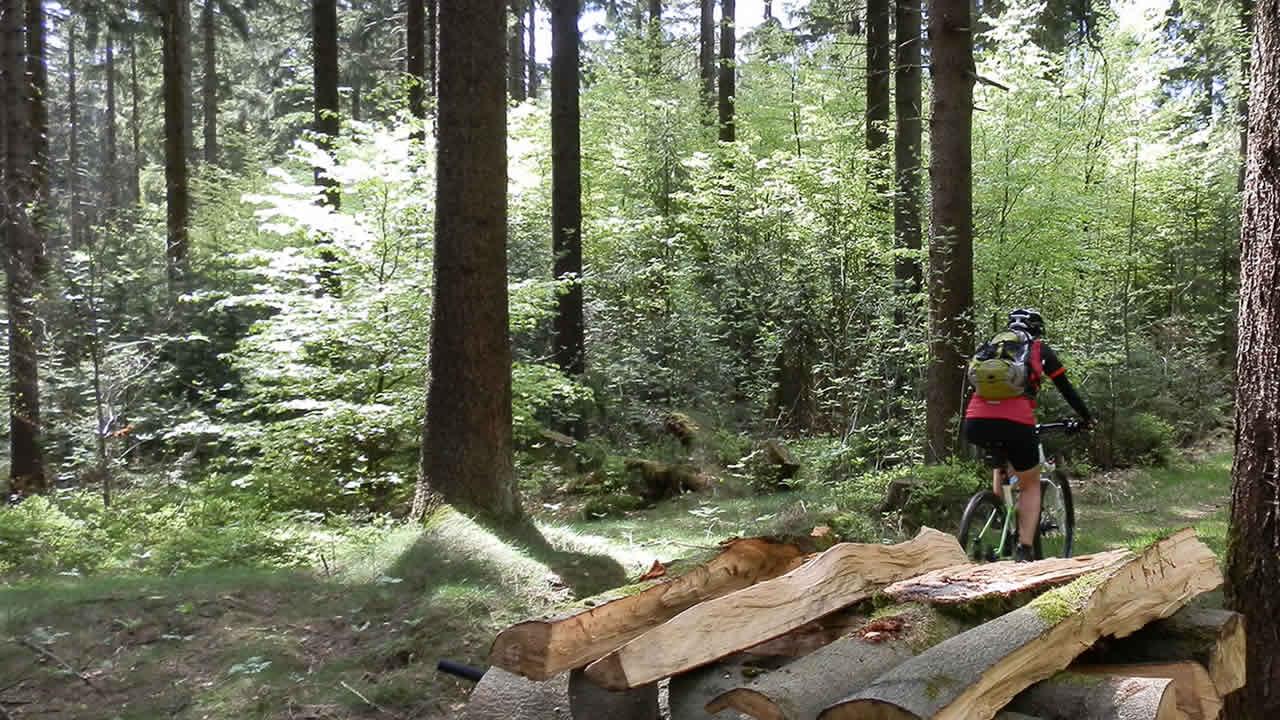 Mountainbiken bei Geroldsreuth